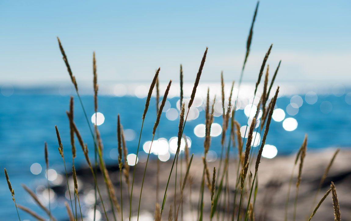Se och Göra på Värmdö – Visit Värmdö – Hav som glittrar bakom gräs