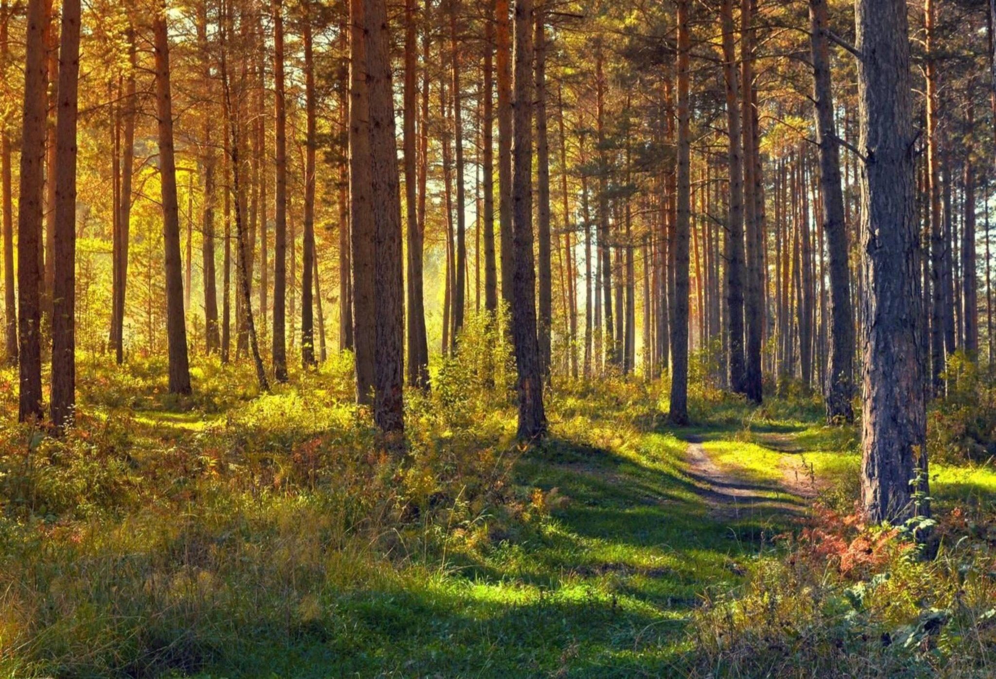grön vandringsled i skogen värmdö