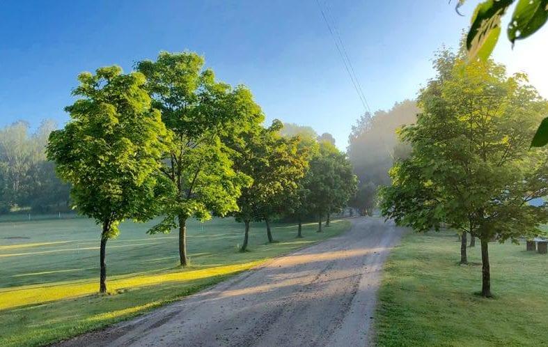 grön allé med träd på norråva golfgård