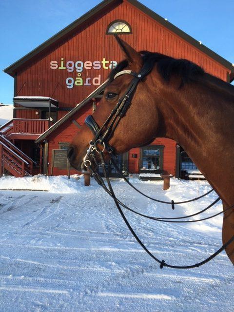 brun häst framför siggesta gård