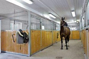 Stall Skaft häst utanför box