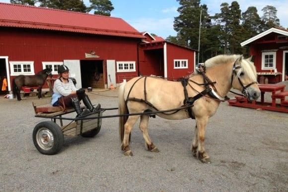 häst på grinda gård